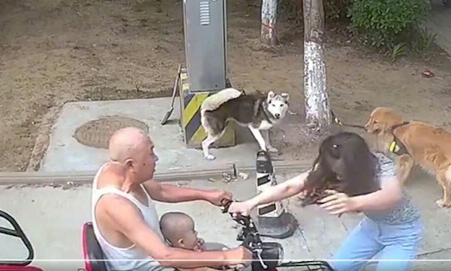河南一女子阻止幼童走向狗狗,被其爷爷开电动车撞翻,哪来的火气