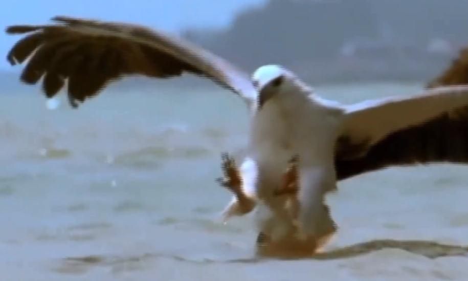 中国最凶猛的鸟类,吃毒蛇像吃辣条一样,厉害!