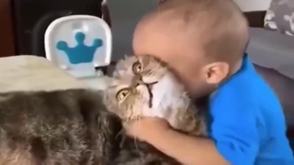 狸花猫:快走开你个憨憨,吸猫不是怎么吸的