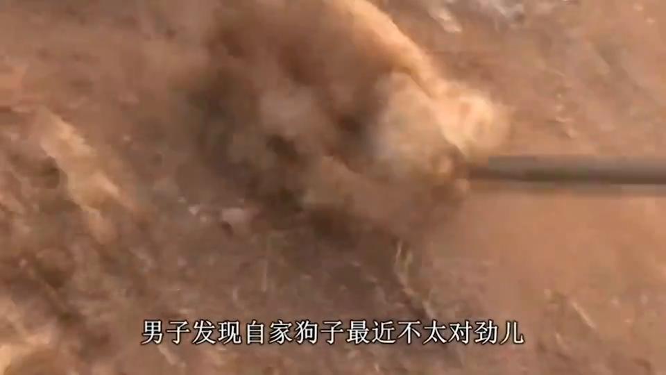家里的狗狗走丢,主人最后在土坑里找到,原因让人泪崩!