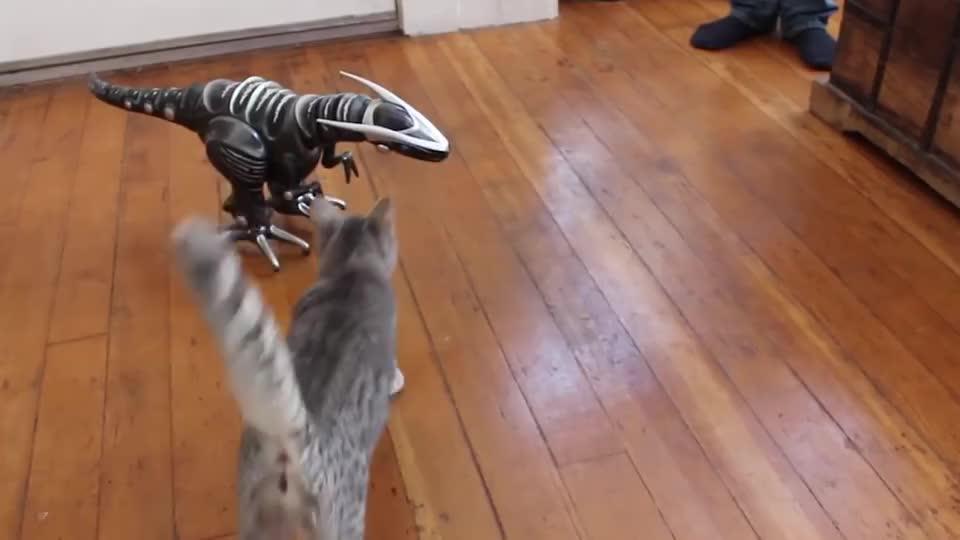主人买了玩具恐龙回家,猫咪走路变成这样,主人差点笑岔气!