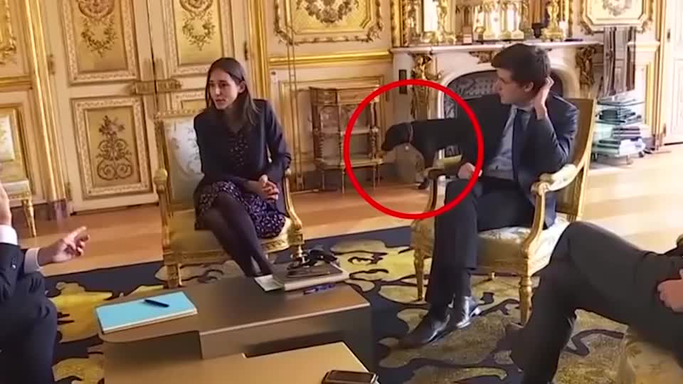 马克龙总统的爱犬,在领导人会议时,在壁炉里进行小便!