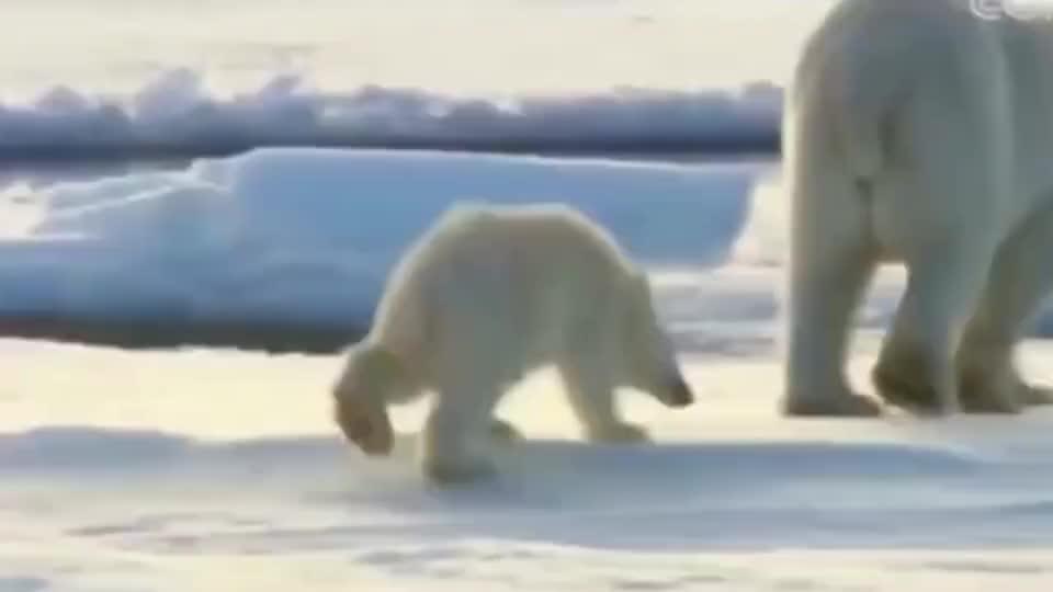 北极熊:请叫我推雪熊