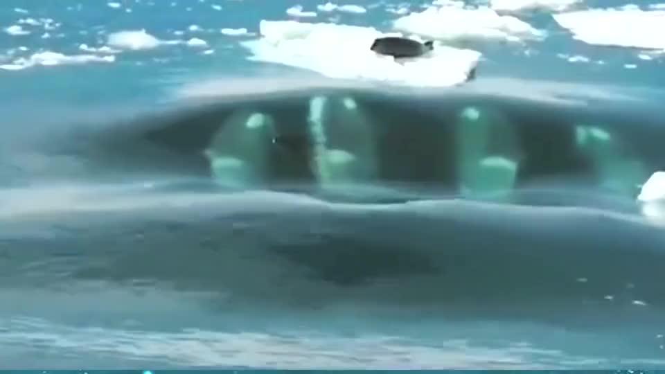 虎鲸想吃小海豹,把冰川往上扬,想把冰川打碎。