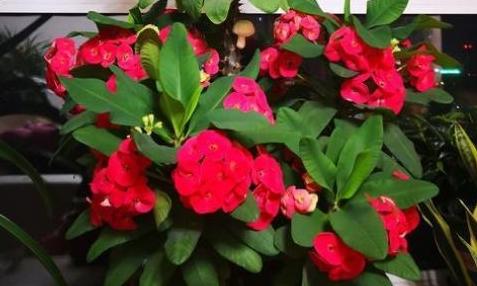 5种超爱开花的花卉,随便养一盆,一开就是大半年,超美超惊艳