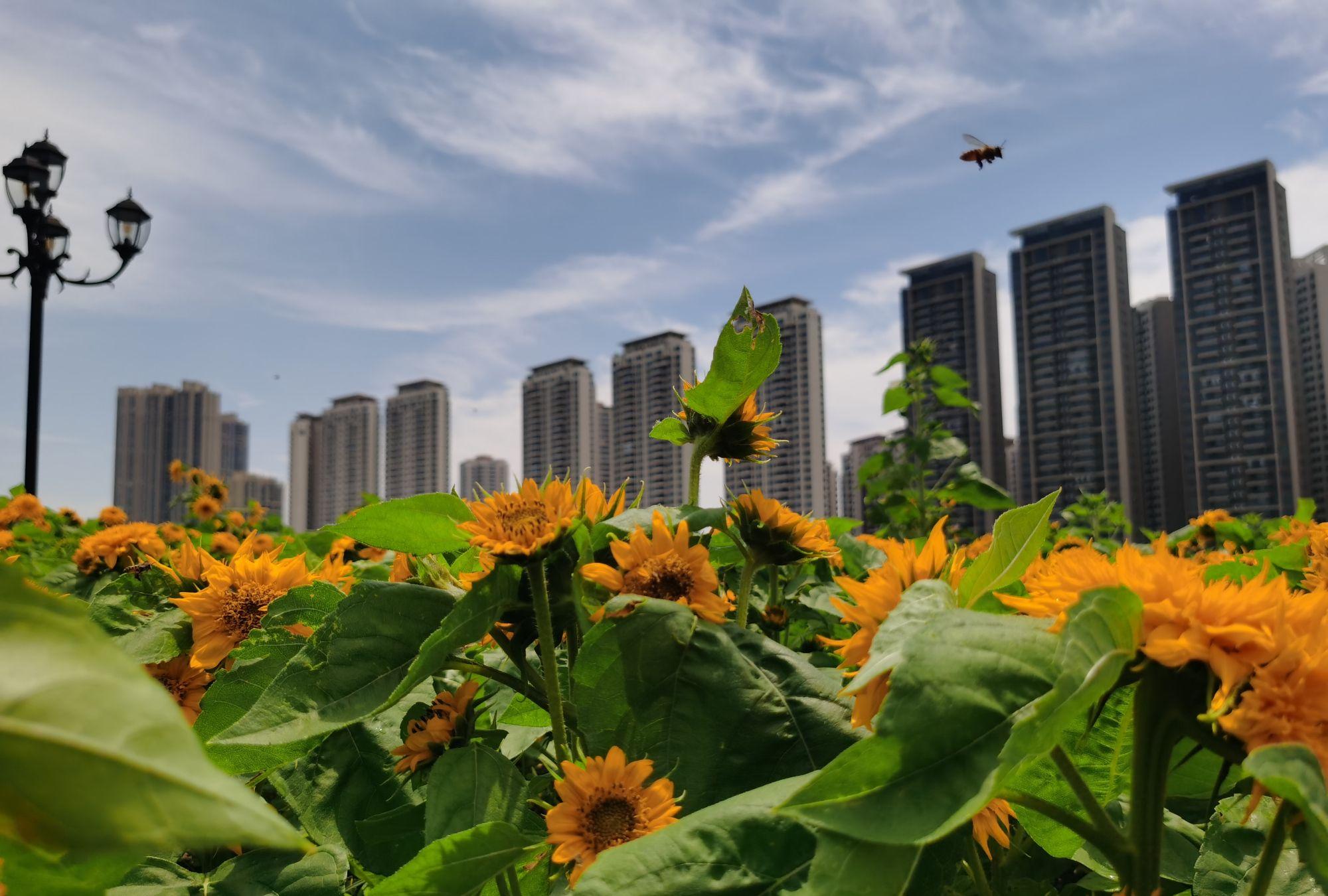 珠海又一大型公园正式对外开放!香山湖公园