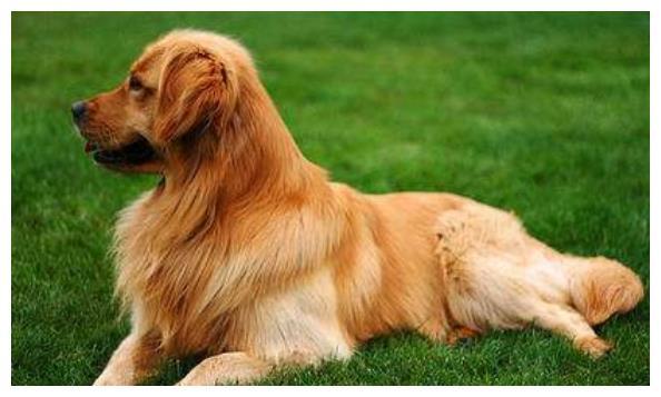 揭秘生肖狗的婚姻与命运,谁才是与你白头偕老之人?属狗人速看!