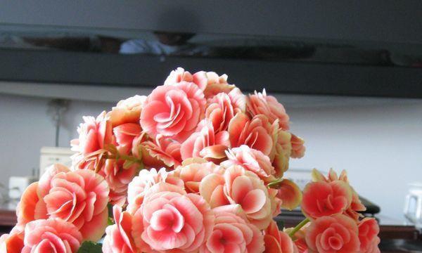 春天养此款花卉,随手养一盆,花大色艳胜玫瑰,打造绝美小花园