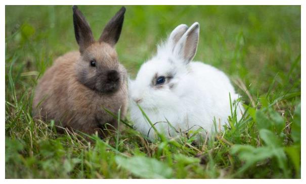 """12月3日一到,生肖兔将会""""喜从天降"""",属兔人快准备接喜吧"""