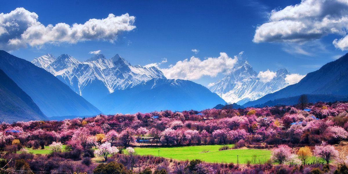 错过了最美的冬日,就到海拔高处的西藏林芝
