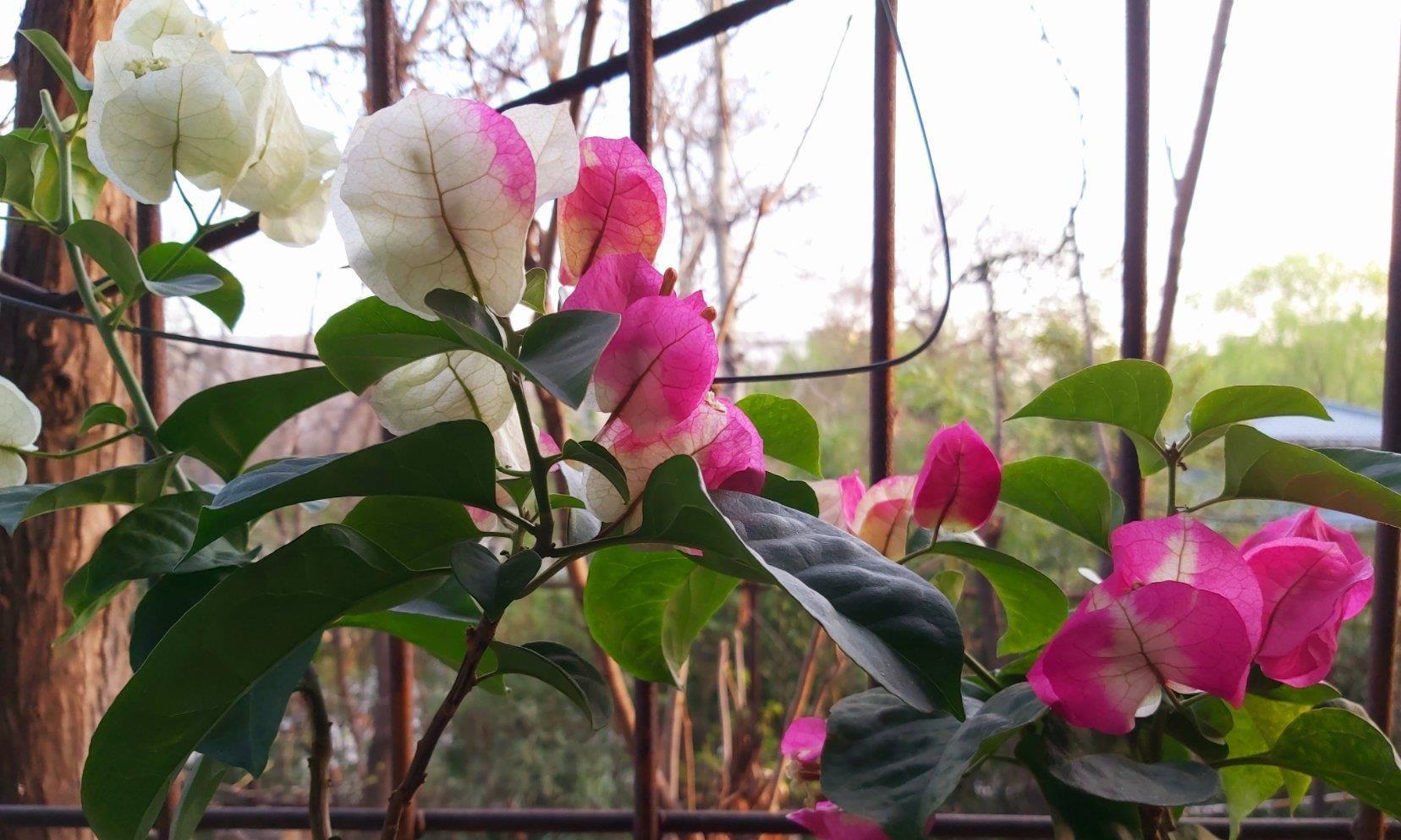 """霜降后,浇花要当心,""""4盆花""""最容易烂根,把握""""分寸""""很关键"""