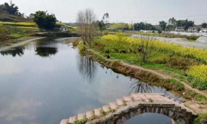 古桥、流水、油菜花黄,诠释自贡杨柳溪的春天!