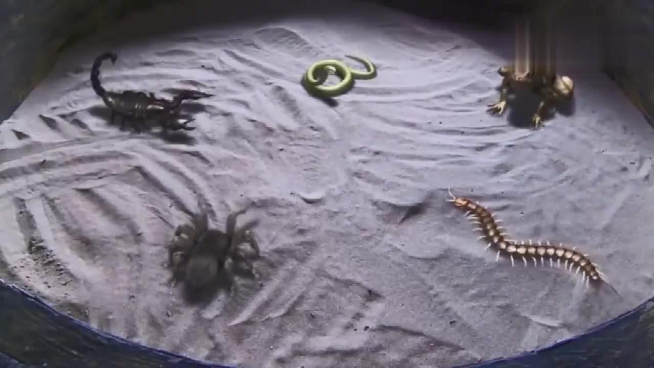 五毒中的最强蜈蚣,竟打不过一条小金蛇,这蛇真是厉害了