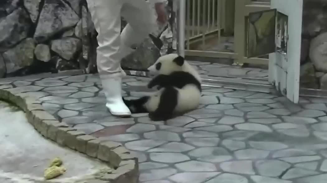 史上最能折腾熊猫宝宝,太可爱了,好想抱回家!