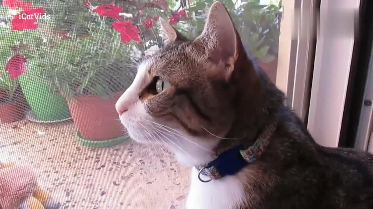 喵星人对着窗外的鸟儿叫,好像在跟外星球通讯
