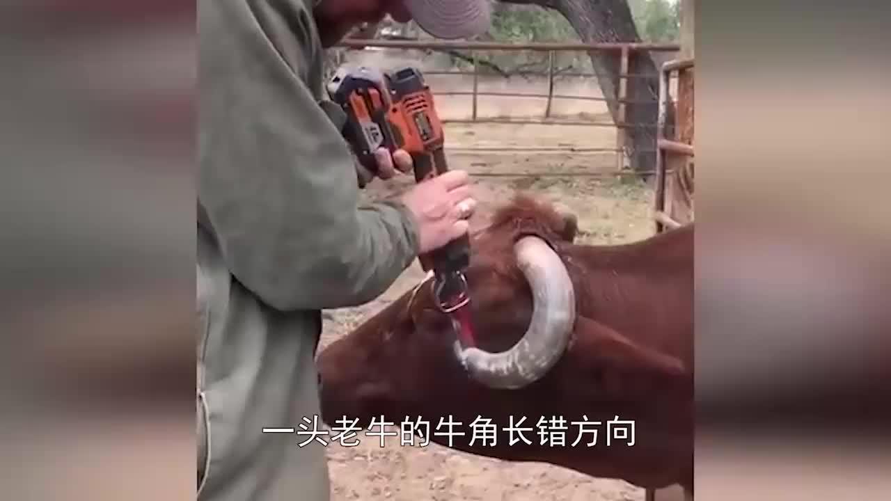 马儿被关禁闭5年,无人问津,马蹄已严重变形,让人心疼!