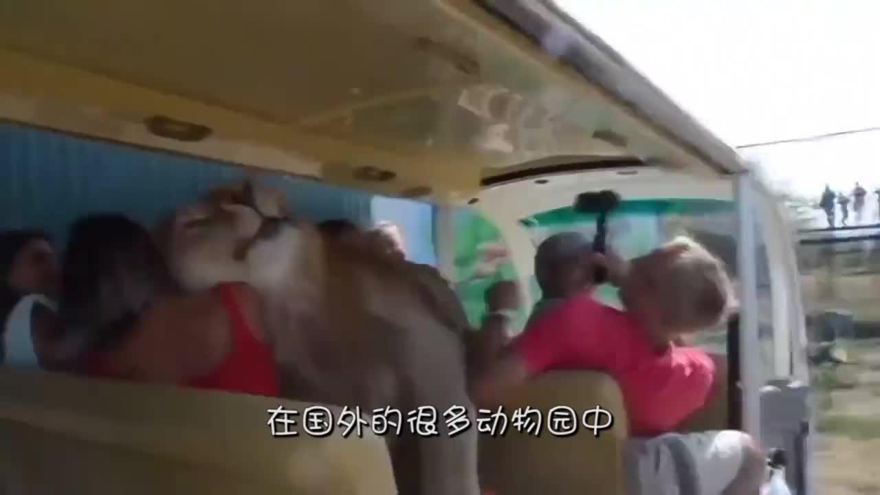游客为看鳄鱼吃野猪,用面包诱拐野猪到河里,最后成这样
