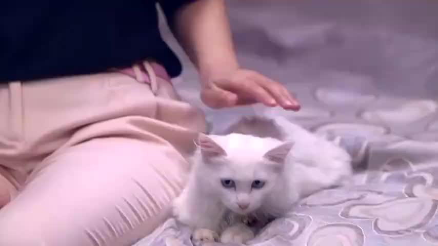 不喜欢小动物就是没同情心,北川这话太武断了
