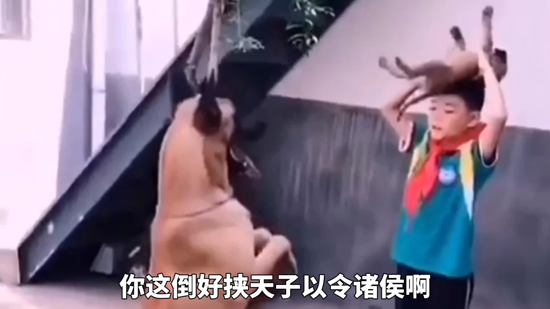 爆笑:小弟弟,你这样训狗好baby啊!