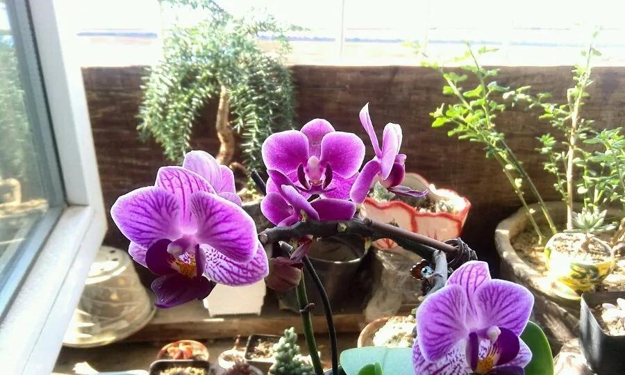 烂心的蝴蝶兰盆栽怎么养?只需2招,秋季使劲爆新芽