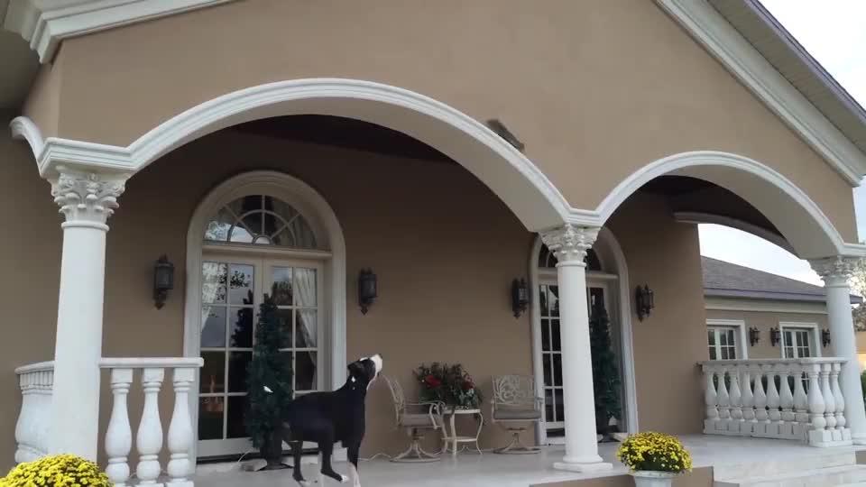 家中狗狗对着拱门狂吠,主人走的一看,发现另有玄机