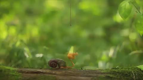 猫咪欺负小鳄鱼,鳄鱼张着嘴不断恐吓,鳄鱼-别太嚣张!
