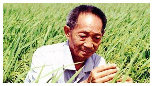 美国农学家让小麦产量提升4倍,获诺贝尔奖,袁隆平为何没得?