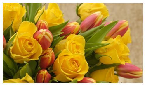 最近七天,缘分桃花绽放,收获爱情有望年底脱单的4大生肖