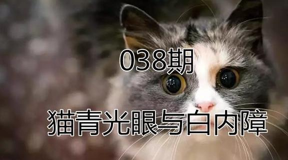 猫咪患眼疾后导致失明,白内障与青光眼不可忽视,主人需尽早诊治