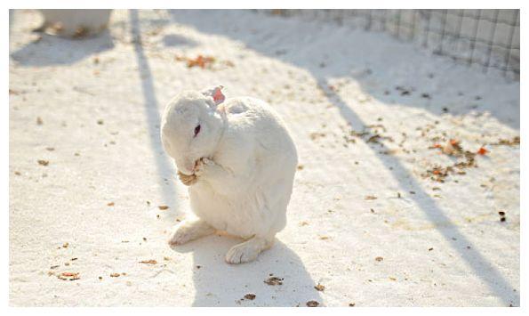 """属兔人,2021年命宫""""德财""""福星照顾,开始走大运!"""