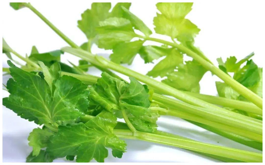 这菜很多人只吃种子,却不知叶子也是宝贝,20元一斤都供不应求