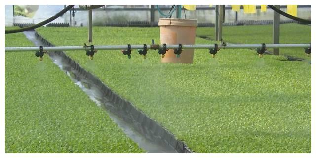 育苗也能机械化 集约化育苗助力春季蔬菜供应