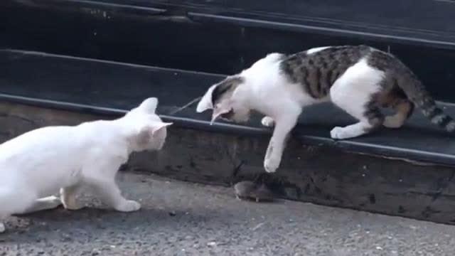 一大早出门就遇上三只猫,能不能给老鼠个痛快