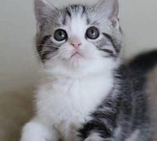 喜欢玩耍的猫,如同行走的人民币,颇受人们的喜爱