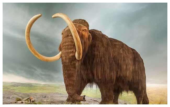 西伯利亚冻土中发现的猛犸象能被复活吗?万事俱备,只差这一步!
