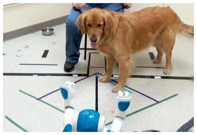 耶鲁大学研究狗与机器人互动,狗听从机器人指令