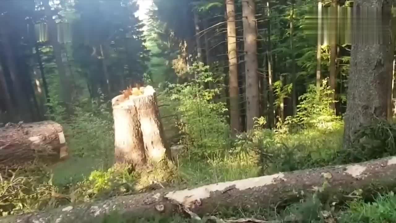 没想到德国是这样伐树的,太先进了,今天算是见识了!