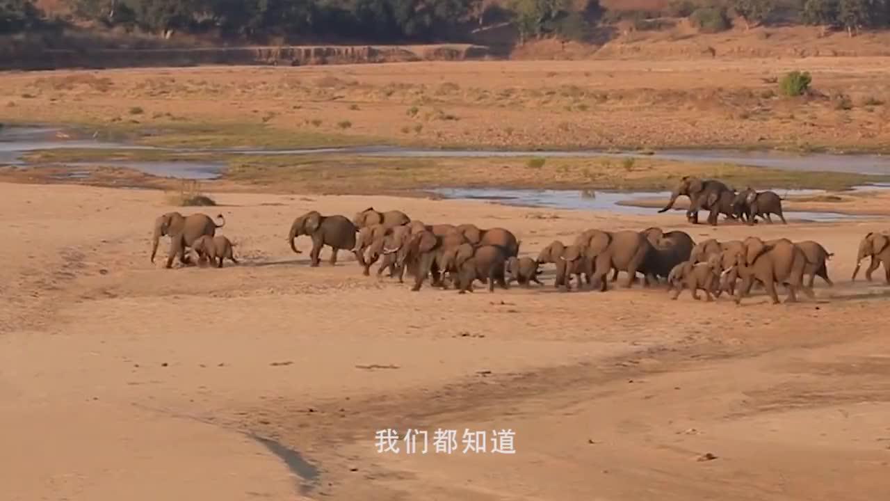 小象不小心掉到水里,象妈妈不离不弃,结局让人感动