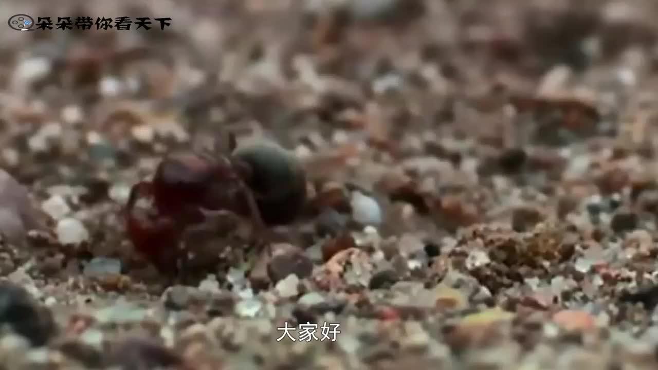 """一群蚂蚁陷入""""死亡漩涡"""",原地转圈直到累死,这是为什么?"""