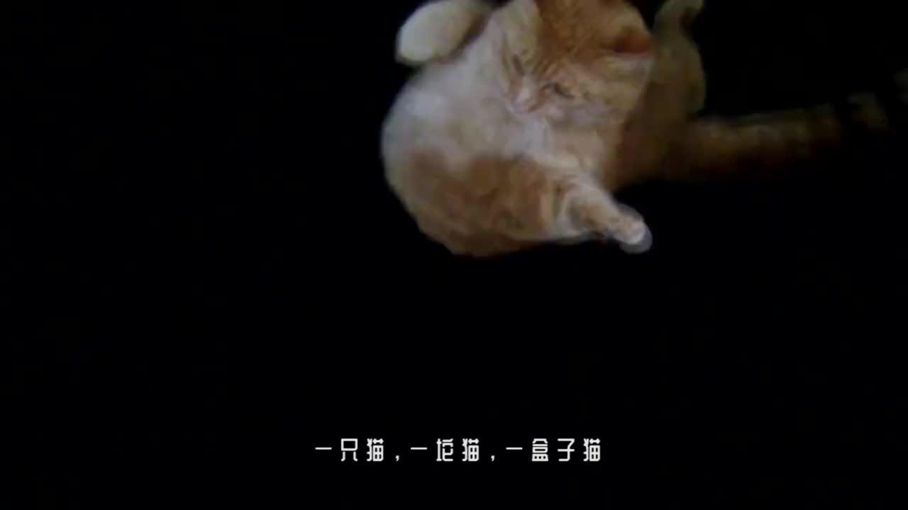 猫到底是固体还是液体?看完诺贝尔奖得主的证明,答案揭晓!