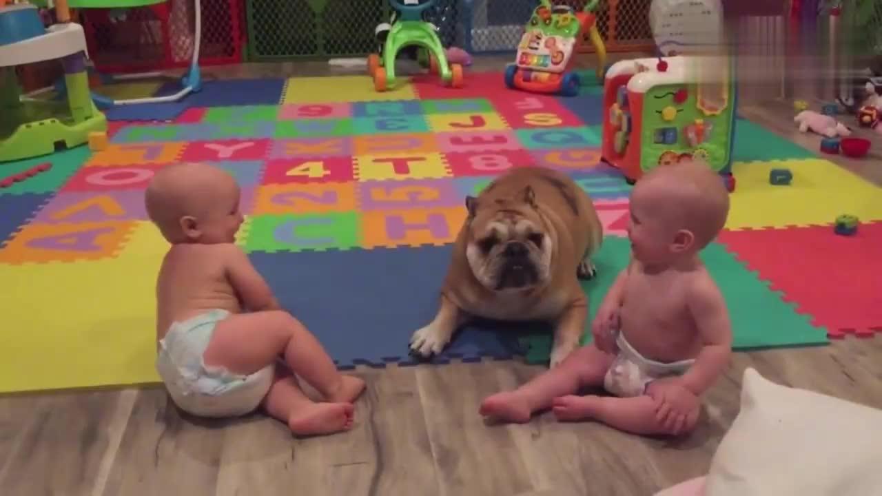 狗狗负责照顾双胞胎兄弟,都得他们笑不停
