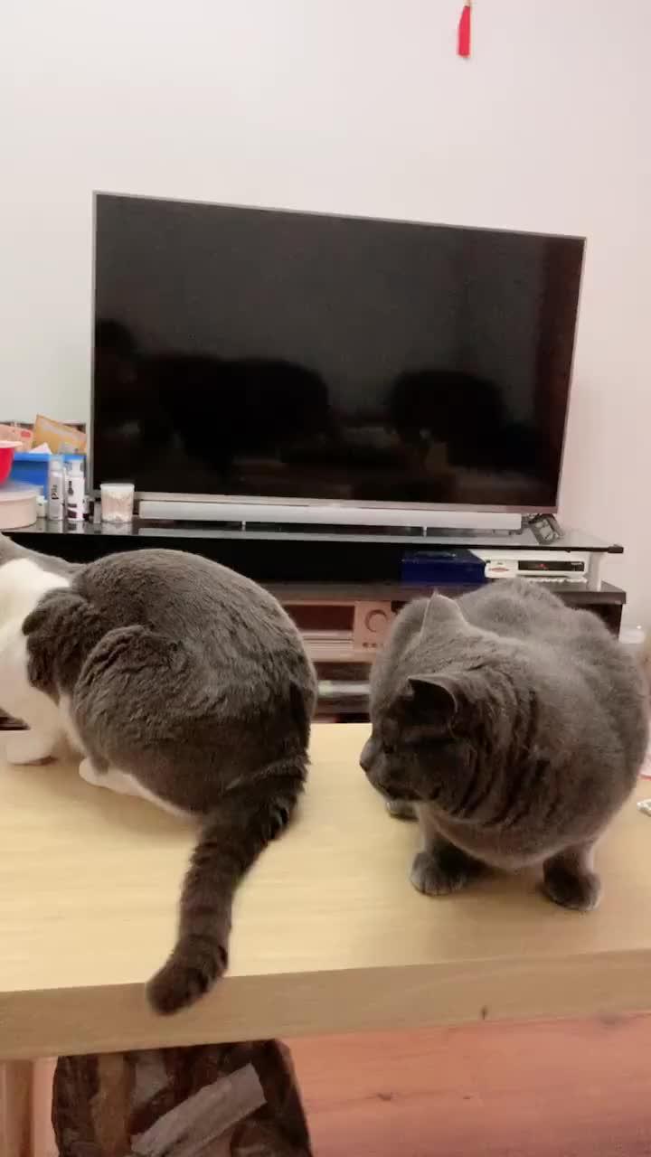 蓝猫帮小伙伴舔尾巴不被领情