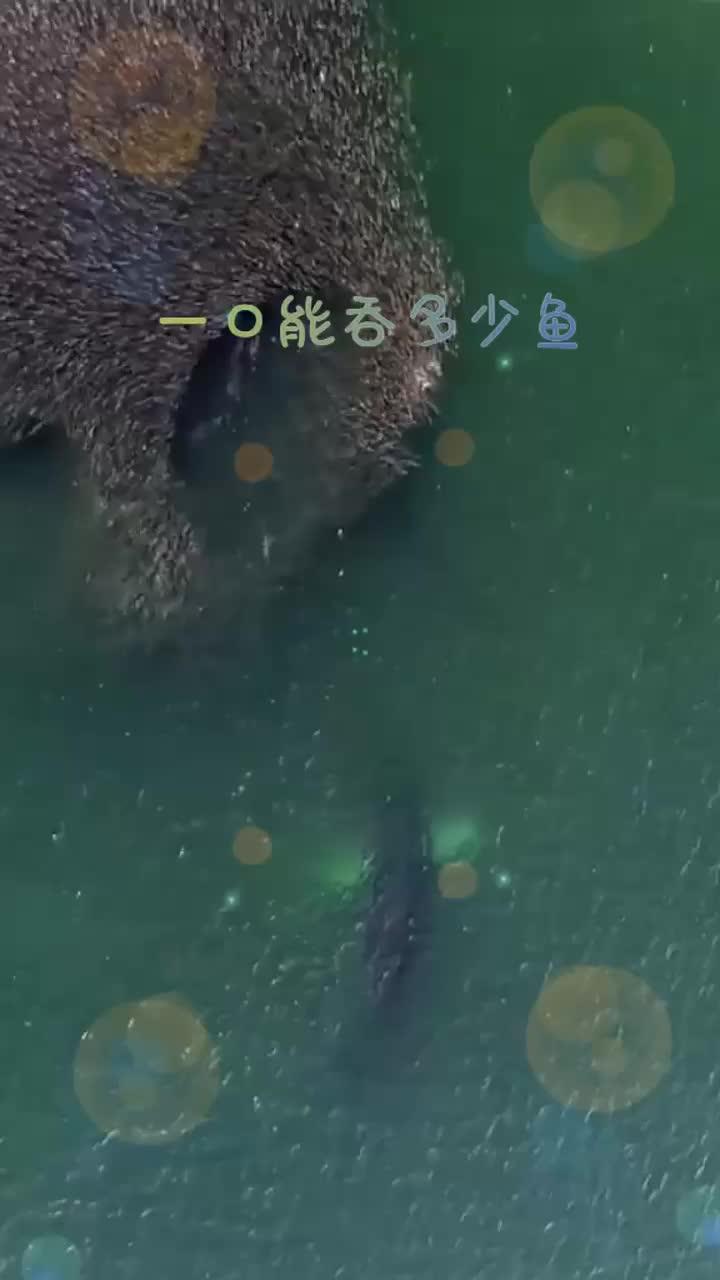 实拍大鱼一口吃多少鱼这个场景惊呆了你们见过吗
