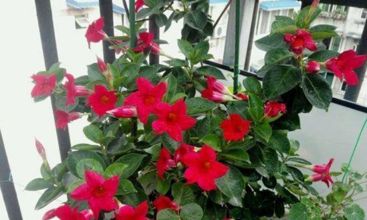 几款艳美的花卉,花大色艳花期长,养客厅一盆,香飘四溢!