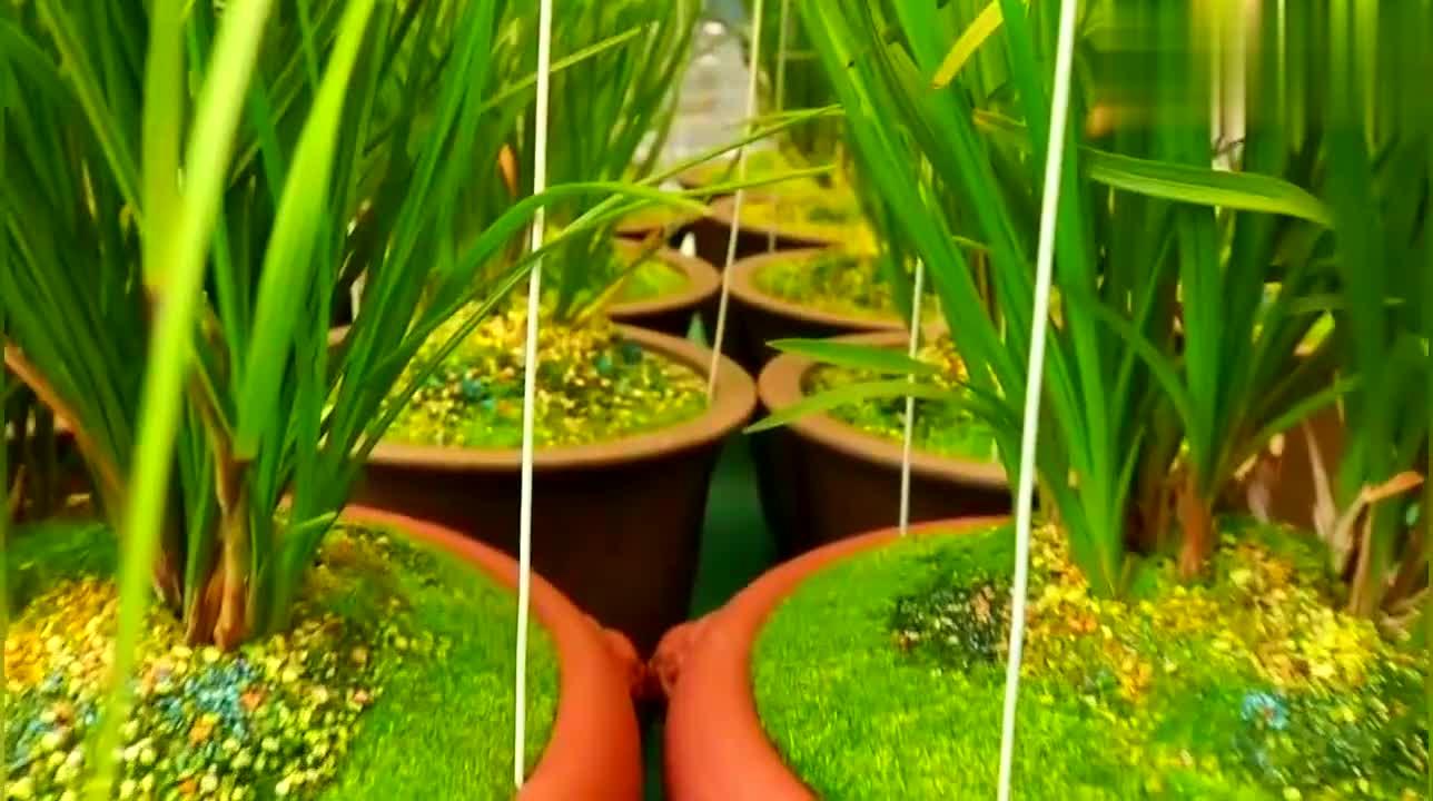 什么是兰花的青杆,青花什么?是兰花的小排铃