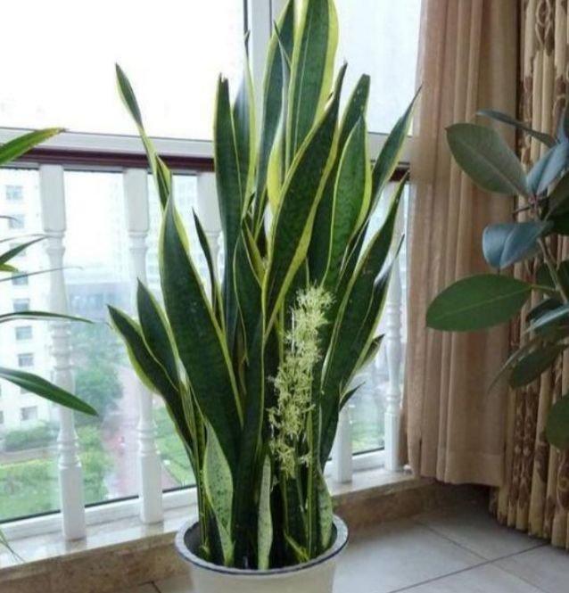 养花就养3种花,家里养一盆,沾土就能活,开花就爆盆