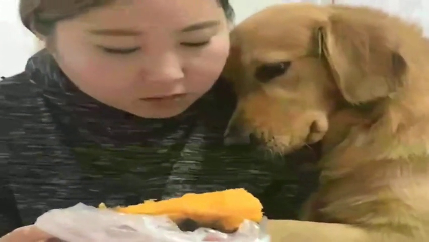 看妈妈吃烤地瓜眼馋不已,狗狗依偎在妈妈怀里撒起娇来,要成精了