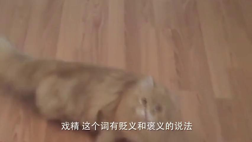 现在的动物都是演技派,用手对猫咪比划一下,它就立马倒地装死!