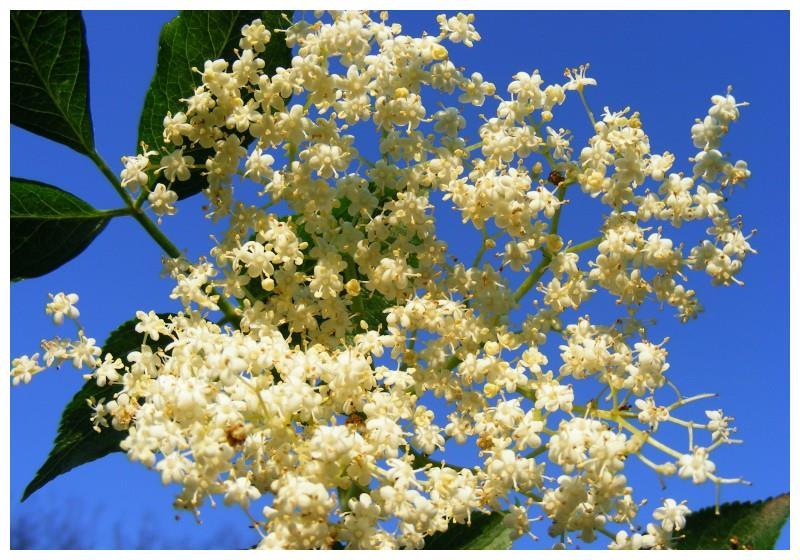 还有10天,缘分与桃花飞燕成双,收获美好爱情的四大生肖!