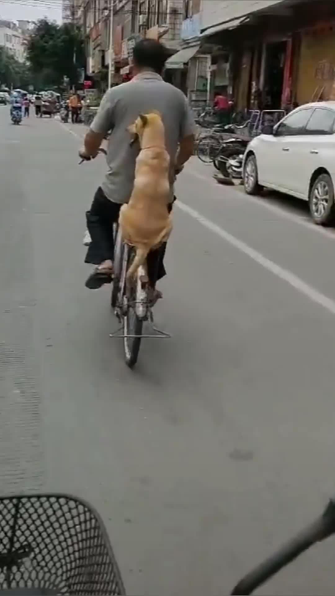 狗狗坐在主人自行车后座上,一脸开心